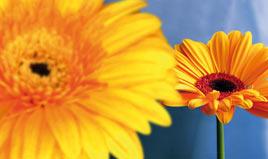 presbyte_fleurs
